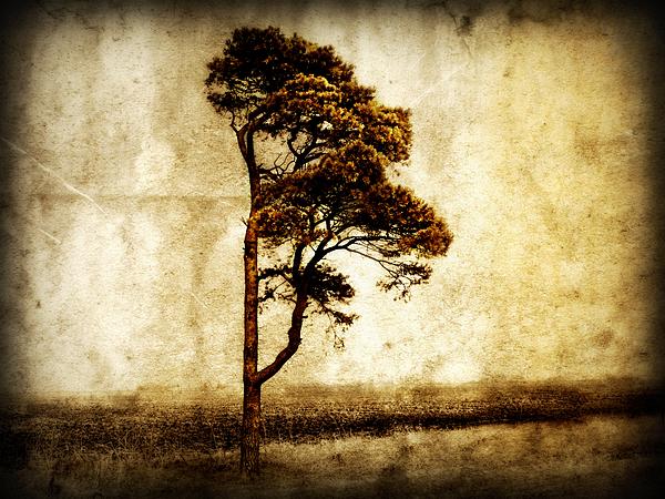Lone Tree Print by Julie Hamilton