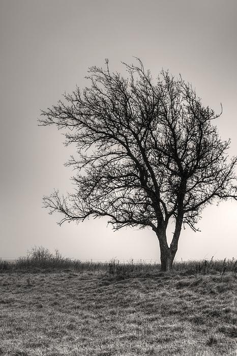 Lonesome Tree Print by Tamyra Ayles