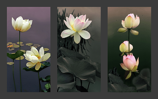 Jessica Jenney - Lotus Collection II