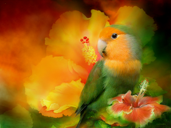 Love Among The Hibiscus Print by Carol Cavalaris