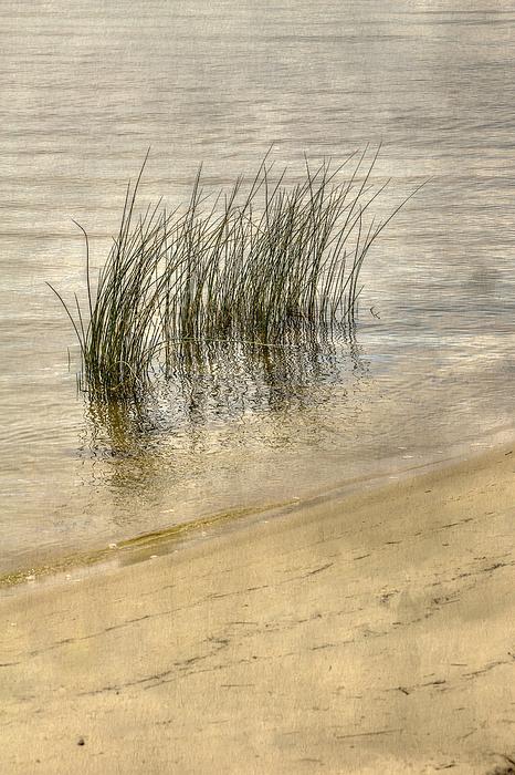 Low Tide Grass Print by Randy Steele