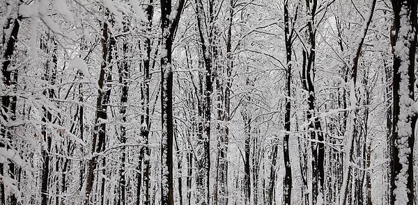 Magic Forest Print by Gabriela Insuratelu