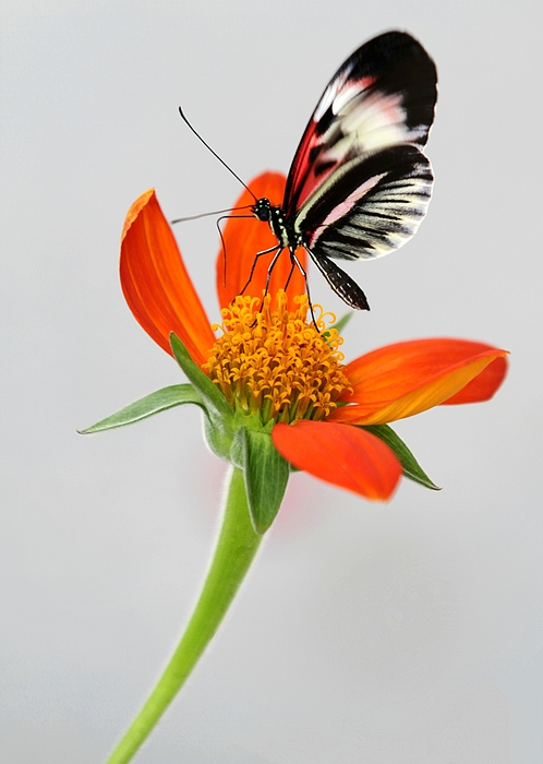 Magical Butterfly Print by Sabrina L Ryan