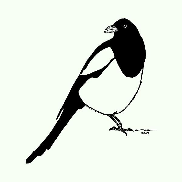 Magpie Bird Print by Karl Addison