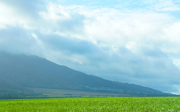 Sheela Ajith - Maui Mountain View