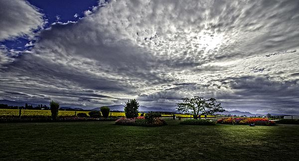 Gary Bengsch - Meadows in the Morning