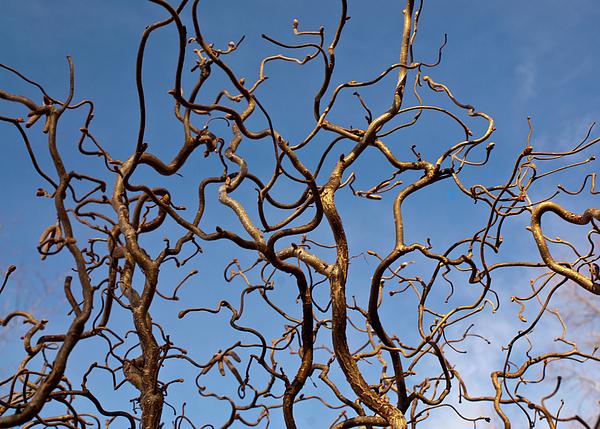 Medusa Limbs Reaching For The Sky Print by Douglas Barnett