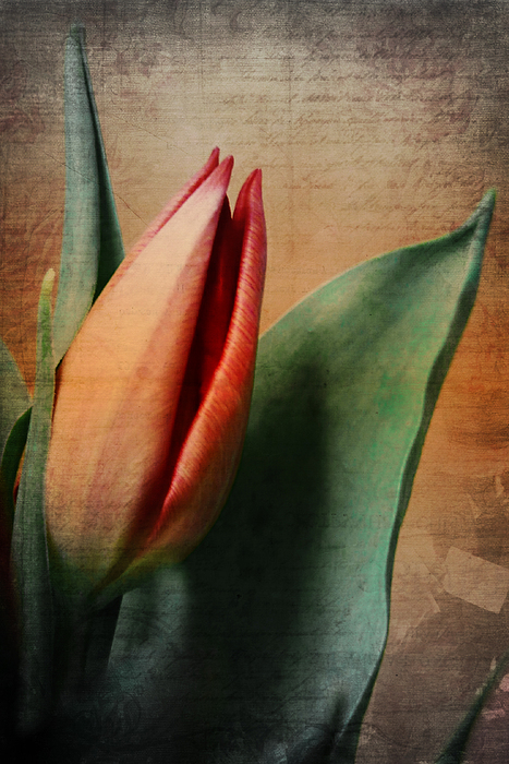 Memories Print by Angela Doelling AD DESIGN Photo and PhotoArt