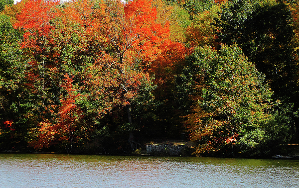 Michigan Fall Colors 5 Print by Scott Hovind