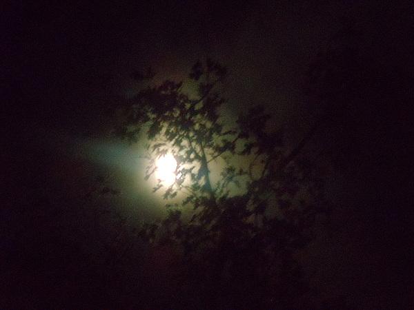 Moon Carroll Net Worth