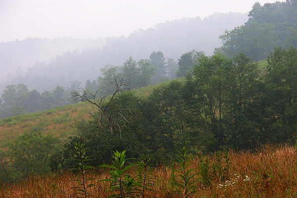 Misty Morning On The Farm Print by Thomas R Fletcher