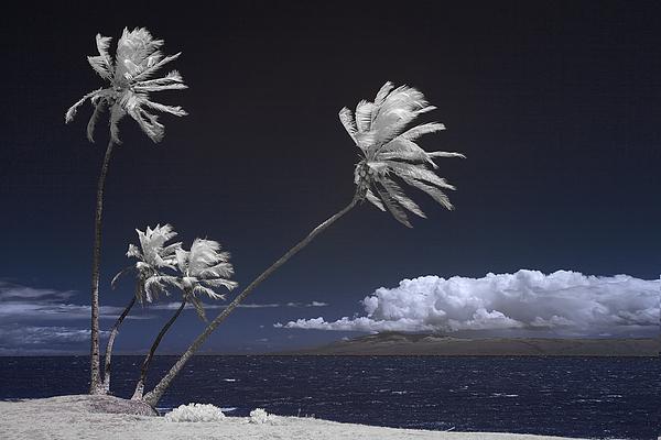 Alan Kepler - Molokai Palms 1