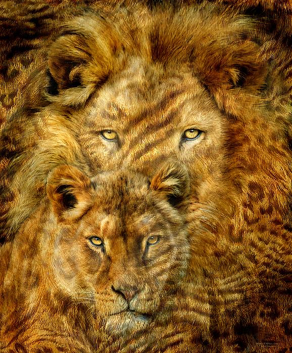 Carol Cavalaris - Moods Of Africa - Lions 2