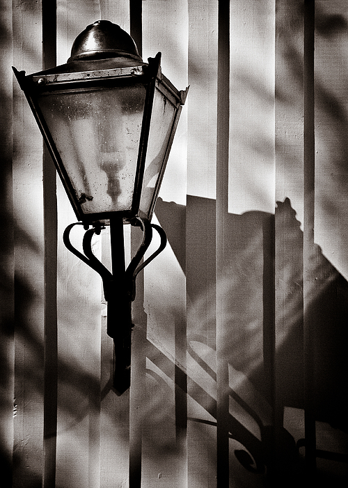 Moth And Lamp Print by Dave Bowman