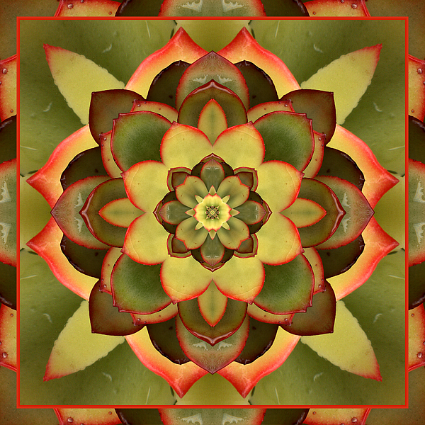 Mother Lotus Print by Bell And Todd