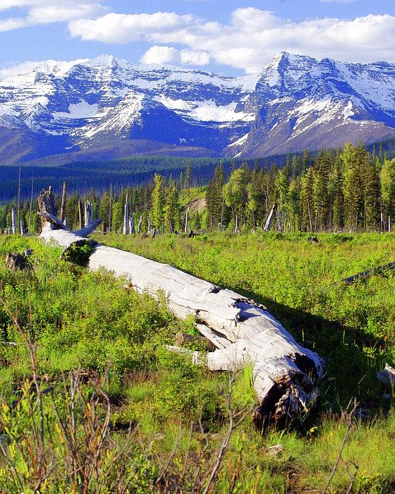 Mountain Splendor Print by Marty Koch