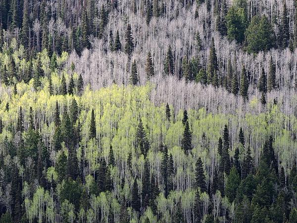 Connor Beekman - Mountainside Forest