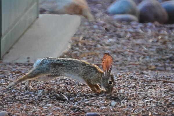 Berta Keeney - Mr. Rabbit II