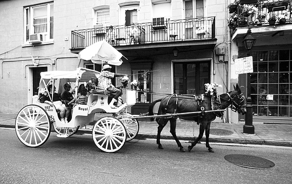 Mule And Buggy French Quarter New Orleans Print by Thomas R Fletcher