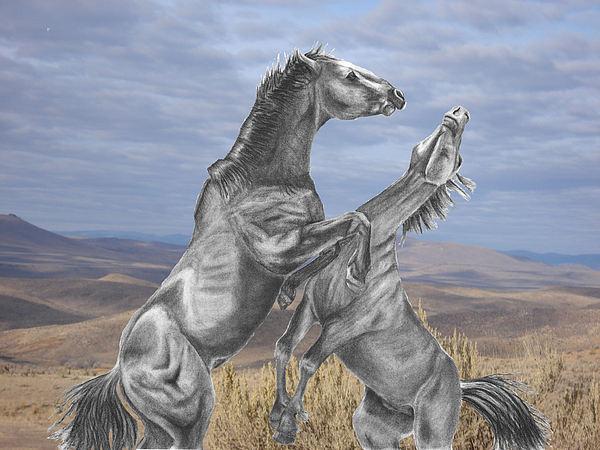 Russ  Smith - Mustang Battle