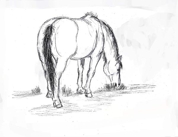 Mustang Mare Field Sketch Print by Dawn Senior-Trask