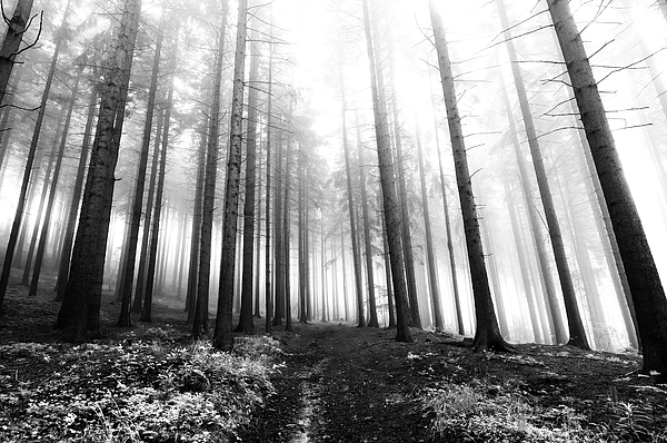 Mysterious Forest Print by Michal Boubin