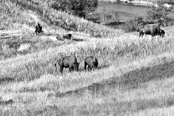 National Bison Range Wildlife Refuge Mt Usa Print by Christine Till