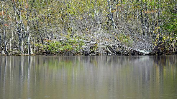 Nancy Comley - Nature Paints the Waller Miller Reservoir