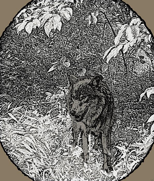Nature Walk Wolf Print by Debra     Vatalaro