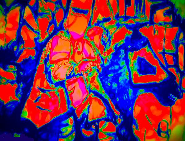 Ned Kellt Gang Art - Blue Seeya Print by J Kamaru
