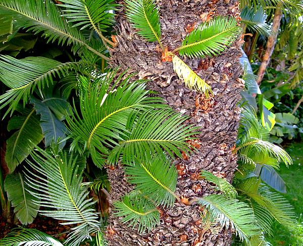 New Palms Print by Mindy Newman