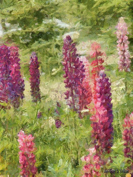 Nova Scotia Lupine Flowers Print by Jeff Kolker