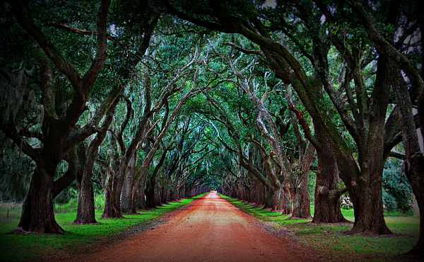 Oak Alley Road Print by Perry Webster