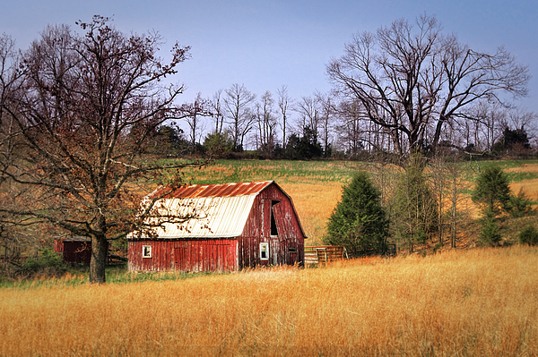 Old Barn Print by Tamyra Ayles