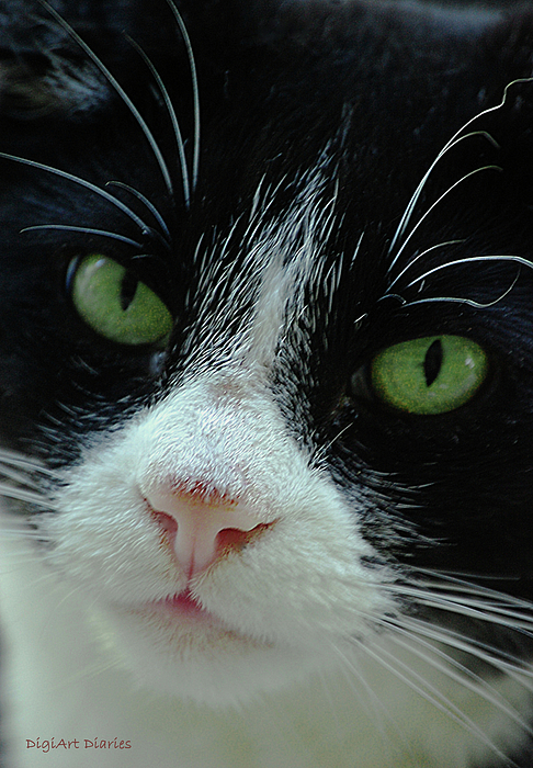 Old Green Eyes Print by DigiArt Diaries by Vicky B Fuller