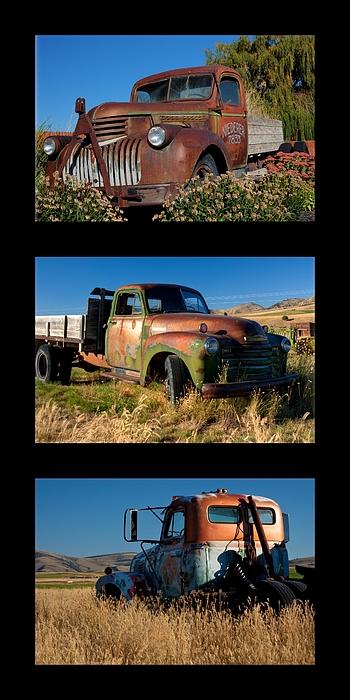 Old Guys Trio 4 Print by Idaho Scenic Images Linda Lantzy