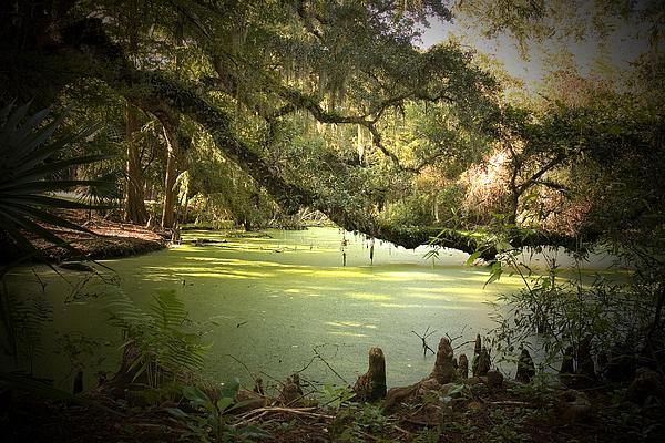 On Swamp's Edge Print by Scott Pellegrin