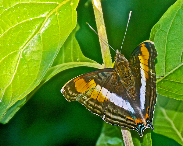 Orange And Brown Butterfly In Iguazu Falls National Park
