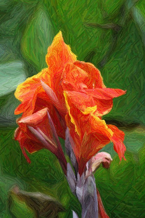 Orange Canna Art Print by John W Smith III