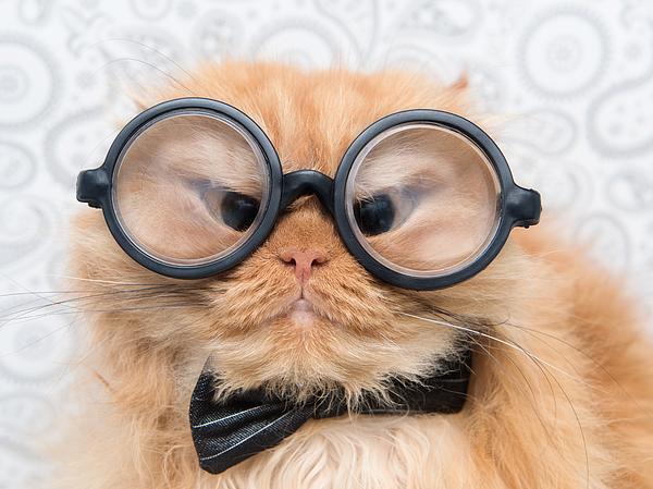 Hulya Ozkok - Orange Persian Cat with Glasses