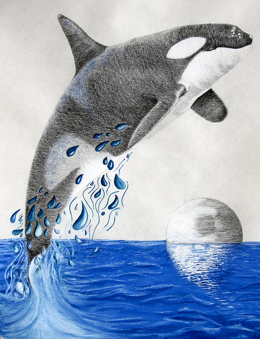 Orca Print by Mayhem Mediums
