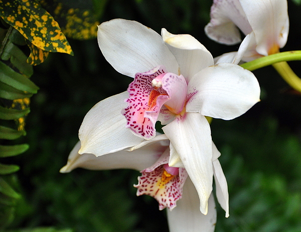 Orchid 29 Print by Marty Koch