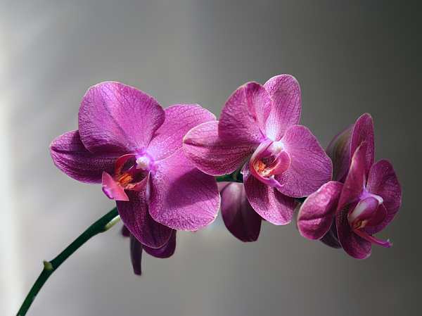 Jason Buckman - Orchids