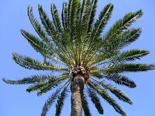 Palm Print by Mindy Newman