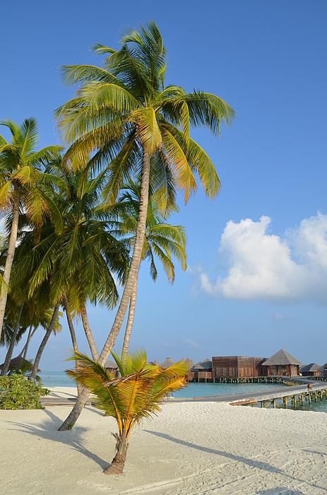 Corinne Rhode - Palm Paradise