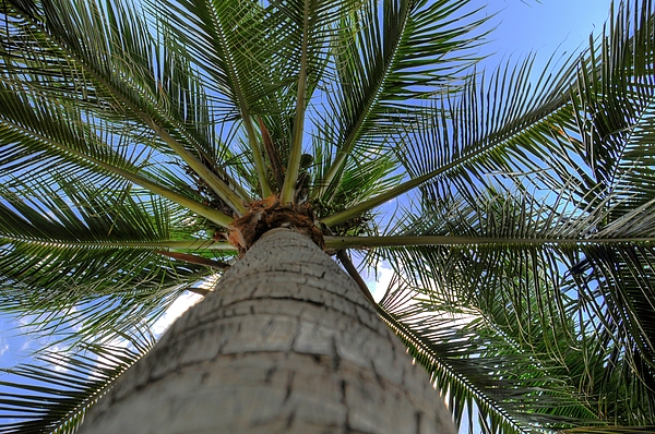 Palm Tree Print by Kelly Wade