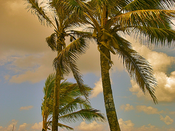 Palm Trees Print by Silvie Kendall