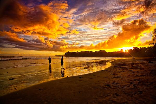 Iris Greenwell - Paradise