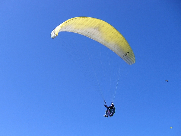 Paraglider And Seagull Print by Will Borden