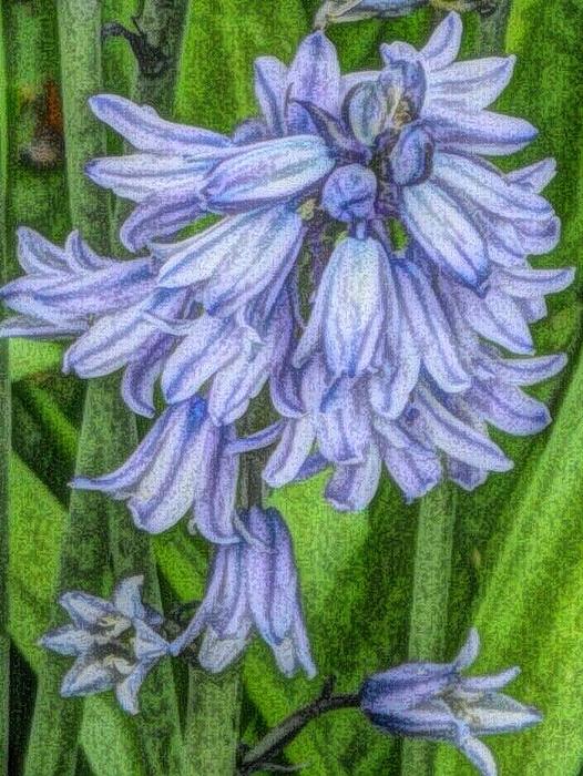 Beverly Canterbury - Pastel Blooms